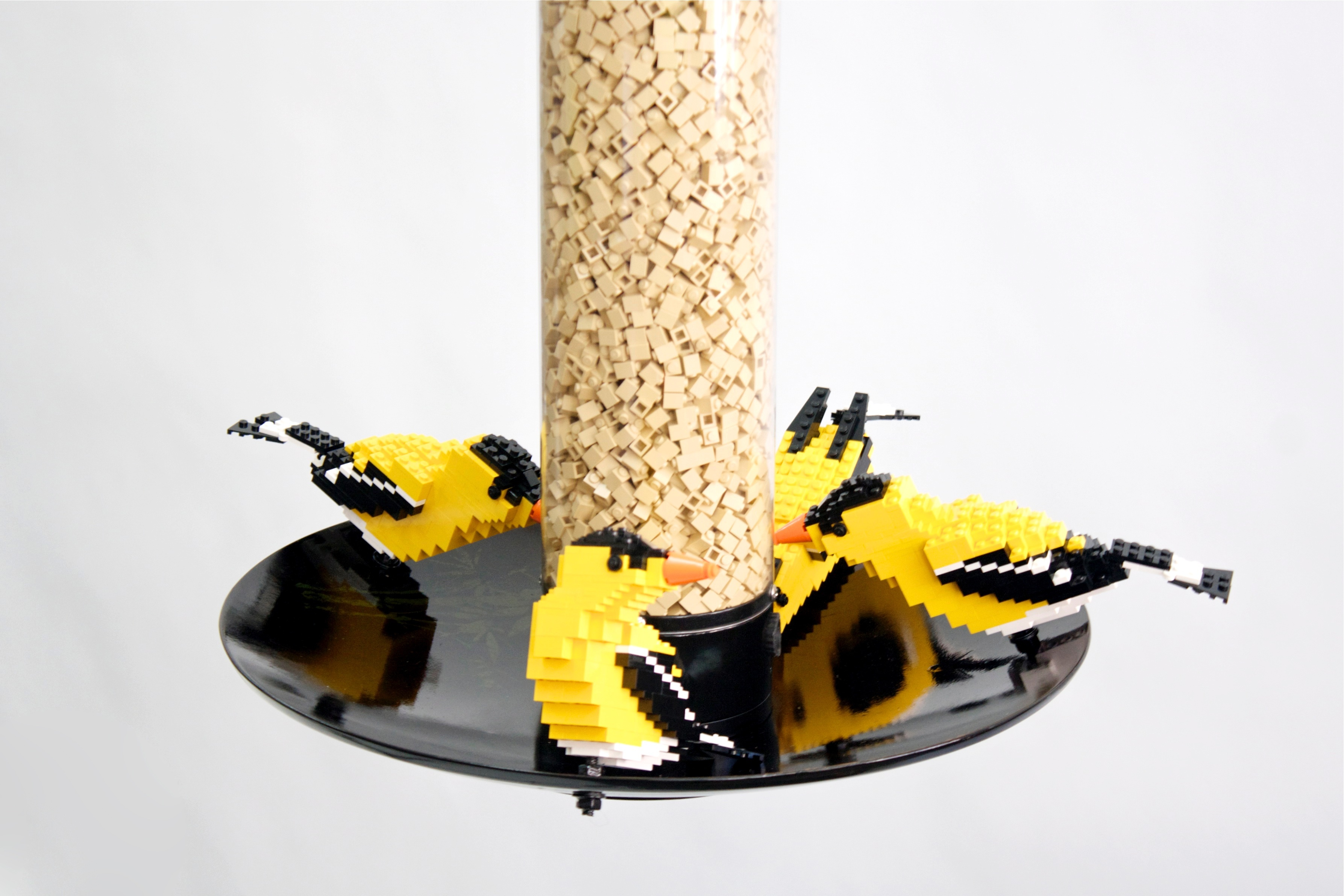 Goldfinches 6 2