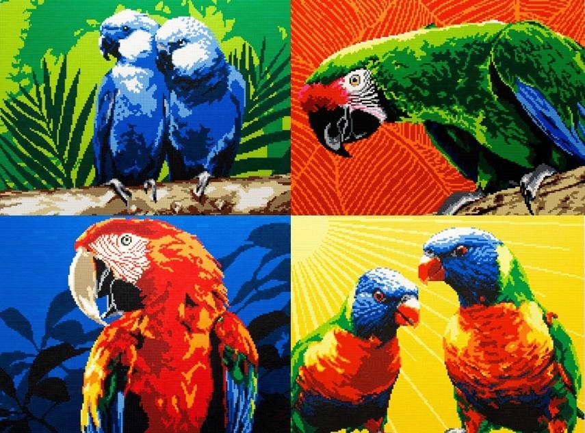 Parrots 7 1